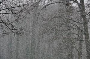 16 01 2016 Schneewanderung 008